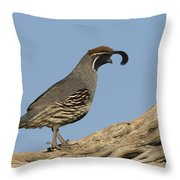Gambels Quail Male Santa Rita Mts Throw Pillow