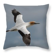 Gannet In Flight Throw Pillow