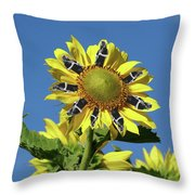 Garciacat Sunflower Throw Pillow