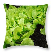 Garden Fresh Baby Lettuce And Lady Bug Throw Pillow