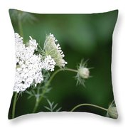 Garden Lace Group By Jammer Throw Pillow