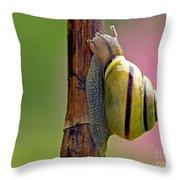 Garden Snail Bright Throw Pillow