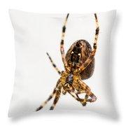 Garden Spider Profile Throw Pillow