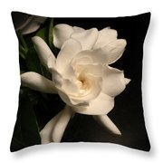 Gardenia Blossom Throw Pillow by Deborah Smith
