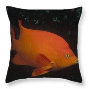 Garibaldi Channel Islands Np California Throw Pillow