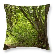 Garibaldi Old Growth Cedars Throw Pillow