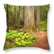 Garibaldi Wilderness Rainforest Throw Pillow