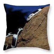 Garter Snake Genus Elapsoidea Throw Pillow