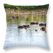 Gathering - Mallars Ducks In Creek Enkopingsaan  Throw Pillow
