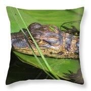 Gator Baby's Head Throw Pillow