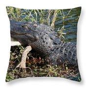 Gator On A Stick Throw Pillow