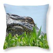 Gator Watching Throw Pillow