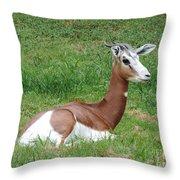 Gazelle At Rest 1 Throw Pillow