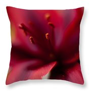 Gazer Red Angles Throw Pillow