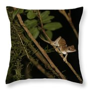 Gecko In The Night Throw Pillow