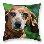 Gem The Miniature Dachshund Throw Pillow