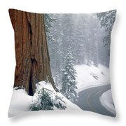 2m6836-generals Highway In The Giant Sequoias Throw Pillow