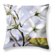Gentle White Spring Flowers Throw Pillow by Elena Elisseeva