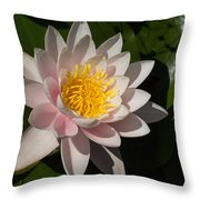 Gently Pink Waterlily In The Hot Mediterranean Sun Throw Pillow
