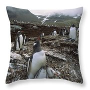 Gentoo Penguin And Chicks South Georgia Throw Pillow