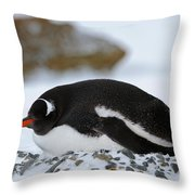 Gentoo Penguin On Nest Throw Pillow