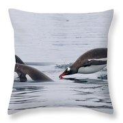 Gentoo Penguins Porpoising Paradise Bay Throw Pillow
