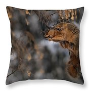 George Eating Maple Seeds In Winter Throw Pillow