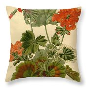 Geraniums Throw Pillow by Philip Ralley
