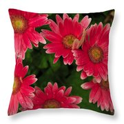 Gerber Daisies Cluster Throw Pillow