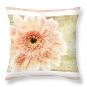 Gerber Daisy 1 Throw Pillow