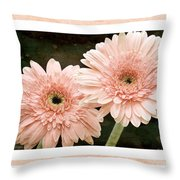 Gerber Daisy 5 Throw Pillow