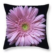 Gerber Daisy Flower Throw Pillow