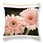 Gerber Daisy Love 5 Throw Pillow