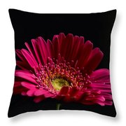 Gerbera Daisy 2 Throw Pillow