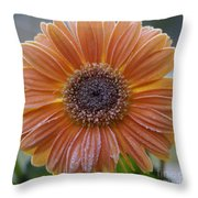 Gerbera Daisy Covered In Frost Throw Pillow