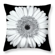Gerbera Daisy Monochrome Throw Pillow by Adam Romanowicz
