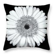 Gerbera Daisy Monochrome Throw Pillow