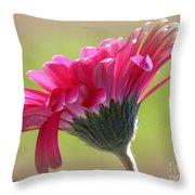 Gerbera Daisy Named Raspberry Picobello Throw Pillow