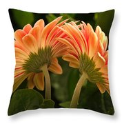 Gerbera Daisy Twins Throw Pillow