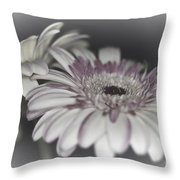 Gerbera Dream 1 Throw Pillow