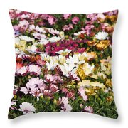 Gerbera Flowers Throw Pillow