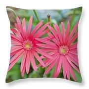 Gerbera Jamesonii / Pink Daisy Flowers Throw Pillow