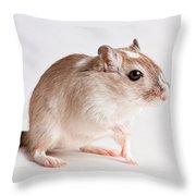 Gerbil Gerbillinae Throw Pillow
