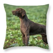 German Short-haired Pointer Throw Pillow