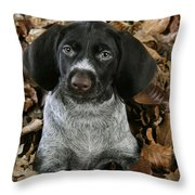 German Wire-haired Pointer Puppy Throw Pillow
