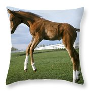 Getting An Early Start Throw Pillow