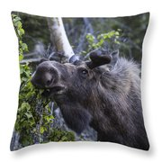 Getting The Look Throw Pillow