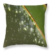 Giant Agave Abstract 4 Throw Pillow