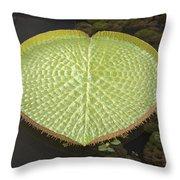 Giant Amazonian Water Lily Pads Closeup Throw Pillow