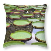 Giant Amazonian Water Lily Pads Throw Pillow